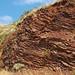 Fault in ribbon cherts (Franciscan Complex, Lower Jurassic-Lower Cretaceous; southern Marin Peninsula, San Francisco Bay, California, USA) 8