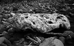 driftwood (salparadise666) Tags: zorki 3m industar 22 collapsable rollei retro 80s caffenol cl 45min nils volkmer analogue film rangefinder russian fsu soviet horizontal wood drift sea shoreline azores portugal