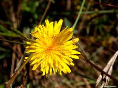 2703  Flores (Ricard Gabarrús) Tags: flor flores plantas botanica naturaleza ricardgabarrus jardin olympus ricgaba flower