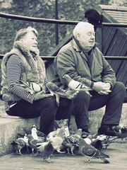 Pigeons being fed in Scarborough (oneofmanybills) Tags: pigeons lady man feeding scarborough seaside waterfront birds