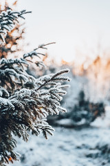 Vintermorgon (olleeriksson) Tags: