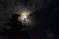 The wild sky (Jane Olsen) Tags: moon celestialbody astronomy outdoor dark night sky clouds alberta canada winter tree
