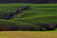Colline marchigiane (luporosso) Tags: natura nature naturaleza naturalmente nikond500 nikonitalia colline hills campagna campi distesaerbosa erba verde green marche italia italy landscape landscapes