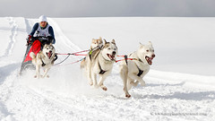 Sled dog race (My Planet Experience) Tags: alaskan husky huskies siberian snowdog sledsog sport team sled snow dog animal nordic speed race racing running man musher mushing pulka pulk sledge sleigh white winter alaska yukon siberia myplanetexperience wwwmyplanetexperiencecom