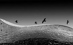 Wild Waves (pwendeler) Tags: ocean sea waves bird wave bw blackandwhite schwarzweis schwarz weis sonyalphaa6500 sony composing