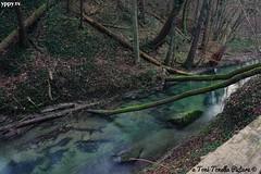 #amazing#waterfall#wasserfall#tree#baum#wald#forest #water#natur#nature#beautifull#2019#new#yppy#toni#tonella#tonitonella#nice#switzerland#swiss#schweiz#art#fotografie#photography#4k (yppy.tv) Tags: beautifull fotografie new photography swiss wasserfall water forest schweiz toni waterfall nature wald tree amazing natur art tonitonella baum nice 2019 tonella 4k yppy switzerland
