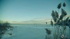 EOS_0119-1238 (DAN PHOTOGRAFIX) Tags: canon eos 6d reflex rehel stmichel paysage hiver winter sun soleil cold froid snow neige glace ice ciel sky nuage cloud quenouille typha river riviere eau water