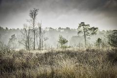 raising mist (Geert E) Tags: landscape mist fog mol buitengoor scenerypines cold winter