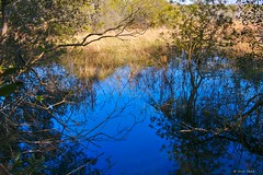 Reflection of a Blue Sky (surfcaster9) Tags: marsh grass blue reflection nature outdoors lumixg7 panasonic