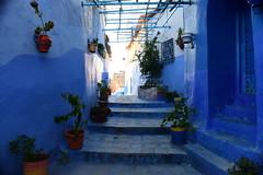 Chefchaouen, Morocco, January 2019 D810 682 (tango-) Tags: chefchaouen bluecity villaggioblu bluevillage morocco maroc 摩洛哥 marruecos марокко المغرب