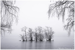 190302 020web (Marteric) Tags: viaredssjön sandared sweden sverige lake nature seascape trees grunge branches ice winter fog foggy mist black white bw