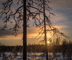 Spring is in the air. (teetaira) Tags: sunset nationalpark tree cloud winter snow backlit finland