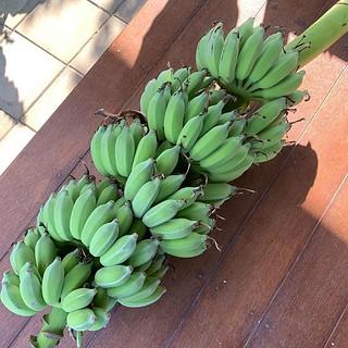 ผลประกอบการวันนี้ #banana