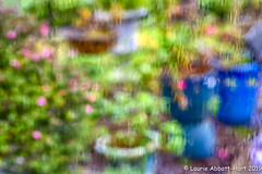 "20190221  ODC22782-Edit (Laurie2123) Tags: fujixt2 fujinon56mm laurieturnerphotography laurietakespics laurie2123 odc ourdailychallenge backyard ""photographic impressionism abstract impresionistic blury rain"