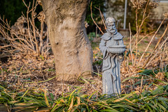 Saint Francis Keeping Watch on this Garden (John Brighenti) Tags: ouside outdoors neighborhood suburb lawn garden plants growth spring evening sunset bokeh sony alpha a7rii ilce7rm2 tamron 2875mm zoom rxd emount femount nex ilce bealpha sonyshooter walking stroll colorful orange brown saintfrancis st statue ornament statuary religious religion catholic monk green tree trunk grass rockville maryland twinbrook md lewisave