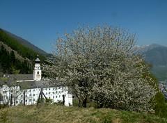 Burgusio - 2 (antonella galardi) Tags: altoadige sudtirol bolzano valvenosta 2011 malles burgusio abbazia montemaria