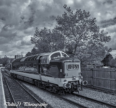 20171008-IMG_6894-Edit (deltic21) Tags: deltic deltics 55 class napier type 5 english electric coco clag british rail railway railways train trains tracks bluebell preserved presevation gala diesel loco locmotive engine traction power thrash br blue green two tone monochrome bw canon sussex lineside trees station foxfield horsted keynes east grinstead sheffield park classic heritage scenery scenic countryside retro vulcan foundry track 55009 55002 55019 alycidon royal highland fusiliers kings own yorkshire light infantry mono