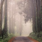 Misty road (explore) thumbnail