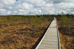 Lahemaa park (jacekbia) Tags: europa estonia lahemaa park przyroda nature natura kładka krajobraz landscape