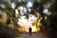 Mr Ordinary Visionary (Lucretia My Reflection) Tags: lensbaby sweet50 abstract outoffocus surreal shadow texture bokeh tiltlens wood colors selectivefocus blur wideopen backlit silhouette dark gothic haunting creepy goth seeinanewway darkness imagination trees