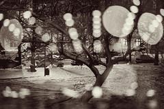 City Lights 92 (pni) Tags: monochrome töölö tölö park snow tree light bokeh bubble topeliuksenpuisto topeliusparken multiexposure multipleexposure tripleexposure helsinki helsingfors finland suomi pekkanikrus skrubu pni pekka nikrus pni3xp