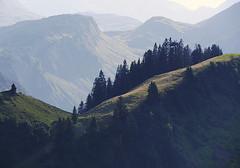 Allgäuer Alpen (Lipsk) Tags: alpen alpenlandschaft berge berglandschaft gebirge landschaft dämmerung nadelwald tannenwald tannen allgäu alm mountains woods forest firtrees landscape