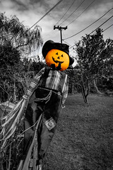 Backyard Pumpkin Pt. 2 (santanathemana) Tags: backyard black white blackandwhite selective color orange cool awesome creative surreal outdoors outdoor nature trees unique canon collegestudent college photographer scary halloween creepy ominous