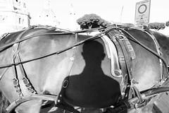 (Unsaddled) (Robbie McIntosh) Tags: leicam9p leica m9p rangefinder streetphotography 35mm leicam autaut candid strangers leicaelmarit28mmf28iii elmarit28mmf28iii elmarit 28mm man blackandwhite monochrome bw rome roma shadow selfportrait