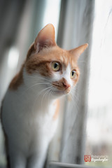 Looking out (LegendaryLeo Studio) Tags: animal cat kitten moment