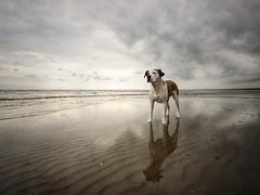 3/52 reflections (Jutta Bauer) Tags: excellentedgar edgar dog reflection beach winter january 52weeksfordogs 52weeksforedgar