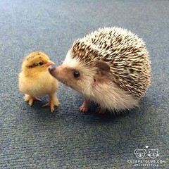 Good friends come in all shapes and sizes! https://buff.ly/2Do8onV (vbclssa) Tags: animal animals lets save some