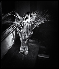 Lomography (Black and White Fine Art) Tags: lomography lomo debonair plasticcamera camaraplastica toycamera camaradejuguete kodakbw400cnexpired2007 expiredfilm bn bw sanjuan oldsanjuan viejosanjuan puertorico shadows sombras light luz