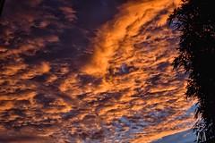 Sunset last night. (SuzieAndJim) Tags: glow clouds sunset suzieandjim nature yellowglow light