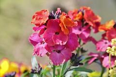 Flower (Hugo von Schreck) Tags: hugovonschreck flower blume blüte macro makro blossom canoneos5dsr