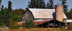 Derelict shed, barn and silo - Oro-Medonte, Simcoe County, Ontario. (edk7) Tags: olympusomdem5 edk7 2017 canada ontario simcoecounty oromedonte abandoned farm barn silo decapitatedsilo country countryside rural weatheredwood rustycorrugatedsteelroof weed tree sky derelict disused vacant corrugated architecture building oldstructure gambrelroofline