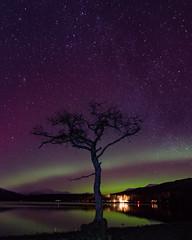Aurora over milarrochy bay! (rossshevlin) Tags: scottish scotland aurora nothernlights lochlomond milarrochybay lonetree longexposure starshot visitscotland nikon nighttime nightphotography