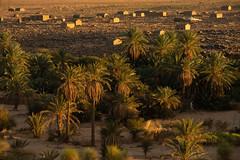 Oasis village (s_andreja) Tags: mauritania ouadane oasis palm trees village