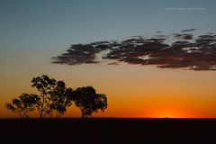 Australia (Robert Lang Photography) Tags: australia australiaaustraliaaustraliaaustralia australiaaustraliaaustralia queensland queenslandaustralia sunset sun dusk setting sunsetting settingsun land landscape colour color tree trees eucalyptus cloud clouds sky pretty nature rural farm contrast orange blue yellow shadow copyspace negativespace horizontal rurallandscape farmingland horizon australiana nativetrees robertlangphotography robertlang robertlangportlincoln robertlangaustralia wwwrobertlangcomau qld