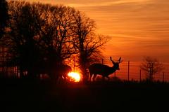 Gunton sunset (3) (jez.hull) Tags: gunton arms february 2019