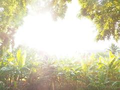 Mayari  Cuba © Kuba Große Antillen © (hn.) Tags: cu cub caribbean groseantillen holguinprovince karibik mayari republicadecuba republik backlight contraluz copyright copyrighted countryside cuba gegenlicht hdr hdrseries hdrserie heiconeumeyer kuba ländlich provinciadeholguin rural tp201901cuba