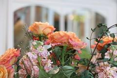 100. Arboretum flower shower (Misty Garrick) Tags: arboretum universityofminnesotalandscapearboretum landscapearboretum flowershow