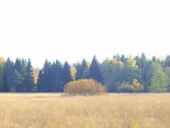 landscape höst (auque) Tags: auque olympuse520 olympuszd50mmf20 olympusworkspace landscape höst herbst autumn fall