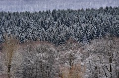 Snow in March (Gerlinde Hofmann) Tags: germany thuringia village bürden snow march11 conifer tree