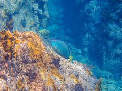 DCL March 2019 Tortola Underwater-91.jpg (Rhinodad) Tags: disneycruise disneyfantasy tuesday underwater 2019 dcl tortola britishvirginislands vg