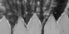 Mind the Gap (vanessa violet) Tags: hff friday fence happyfencefriday fencefriday picketfence snow snowflakes winter mindthegap