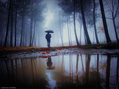 Double (Guillermo Carballa) Tags: man people pines puddles pahts fog forest woods water rain umbrella carballa olympus em5 light trees mist morning shadows leaves leafs