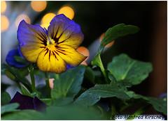 Frühlingserwachen 2 (manfredkirschey) Tags: frühling nature natur garten frühlingserwachen kirschey manfred manfredkirschey