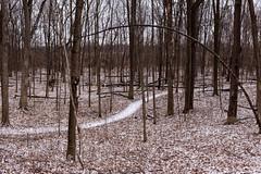 Guiding Path (BRB1952) Tags: panorama mayburystatepark northville michigan