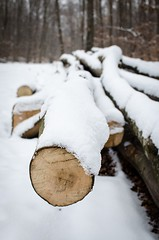 A Winter Walk (stefan_wolpert) Tags: woods forest walk winter wintertime subject winterseason winterzeit cold wood woodpile coldness kälte spaziergang wald waldspaziergang symbol bokeh snow snowy snowlandscape