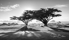 Monterey Sunset thru Cypress Trees- (Jeffrey Balfus (thx for 5.9M views)) Tags: mpcc golf sonyalpha fullframe sel24240 24240mm f3563 oss zoom lensblack white bw monochrome sonyilce6300 sony6300 mirrorless sonyemount sony70400mmf45gssmii sonyfe2470mmf28gm sel2470gm|a67 vividstriking coverphoto 2x2 thefinissage walkinginheaven 100favs saariysqualitypictures
